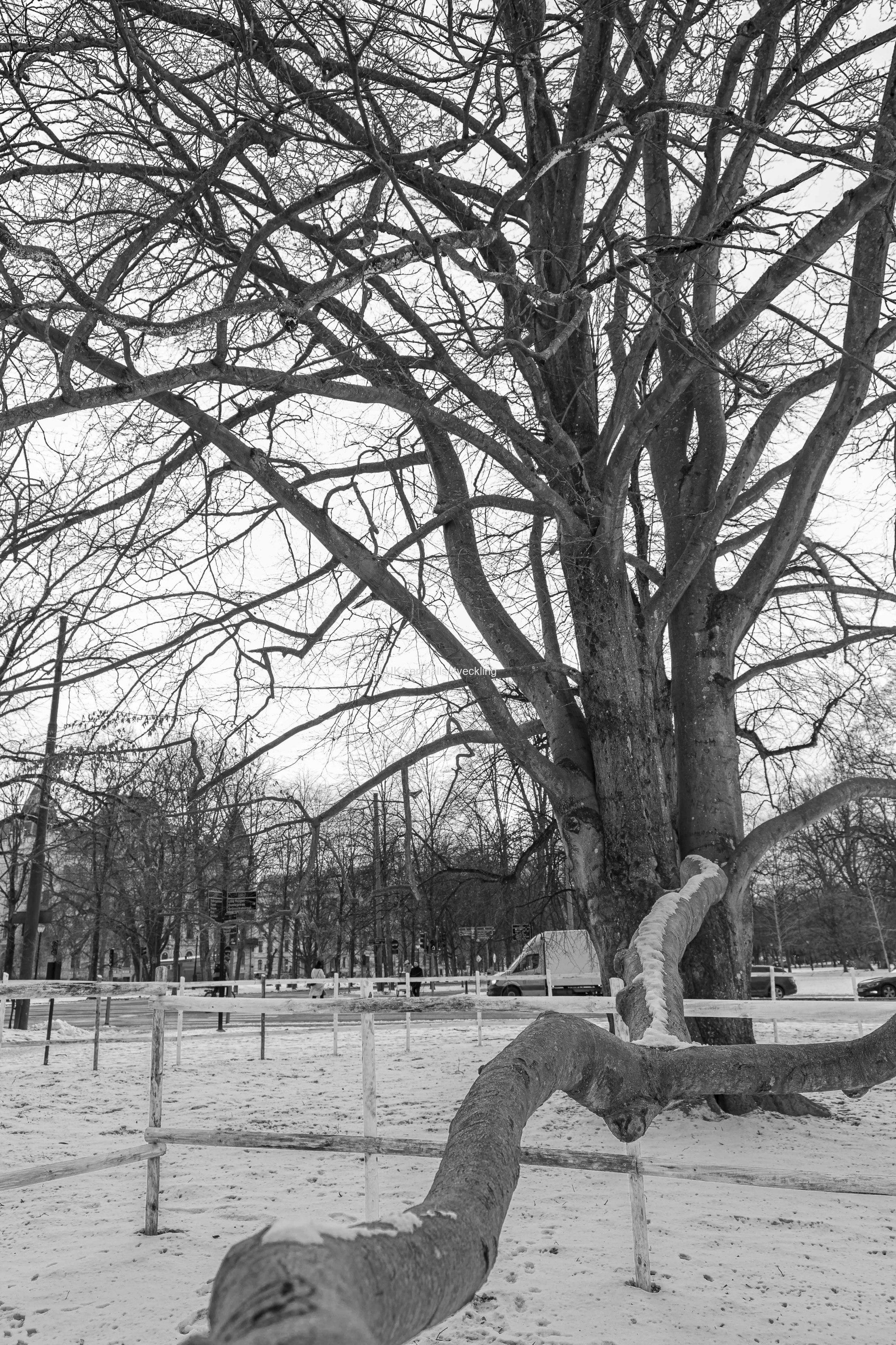 Ett svartvit foto på samma träd i porträttformat .