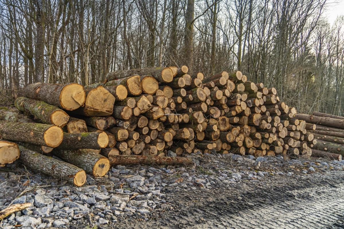 I Öjersjö, Gökegården har man avverkat skog för att ge plats för 500 nya bostäder.