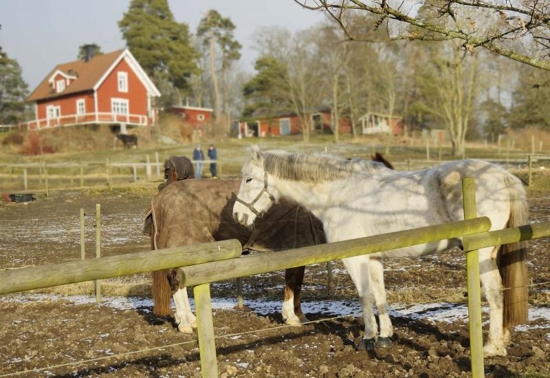 Hästar Jonsered år 2017