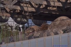 På Universeums tak bor dinosaurier