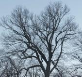 Fåglar i träd på Falutorget