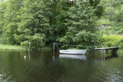 En eka vid bryggan Alehagen